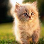 صور قطط جميلة جدا قطط كيوت للفيسبوك 3