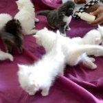 صور قطط جميلة جدا قطط كيوت للفيسبوك 4