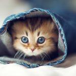 صور قطط جميلة جدا قطط كيوت للفيسبوك 6