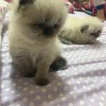 صور قطط جميلة جدا قطط كيوت للفيسبوك 7
