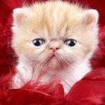 صور قطط جميلة جدا قطط كيوت للفيسبوك 8