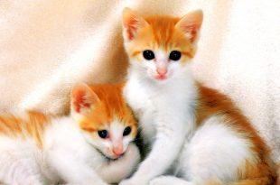 صور قطط