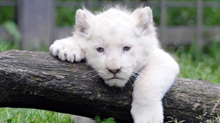 Des ONG veulent racheter un zoo pour preparer le retour des animaux a la nature