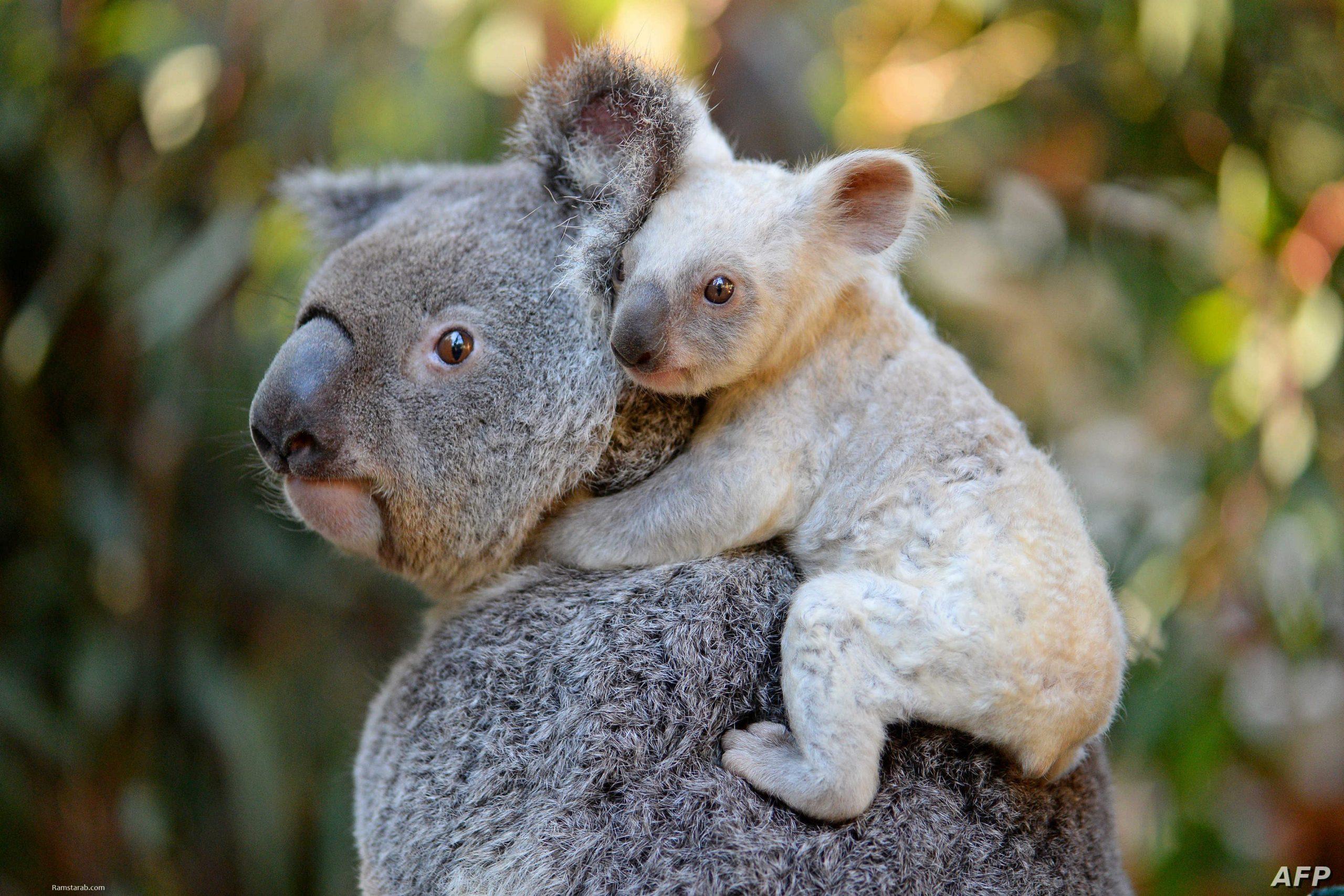 اجمل صور الحيوانات 2021 12