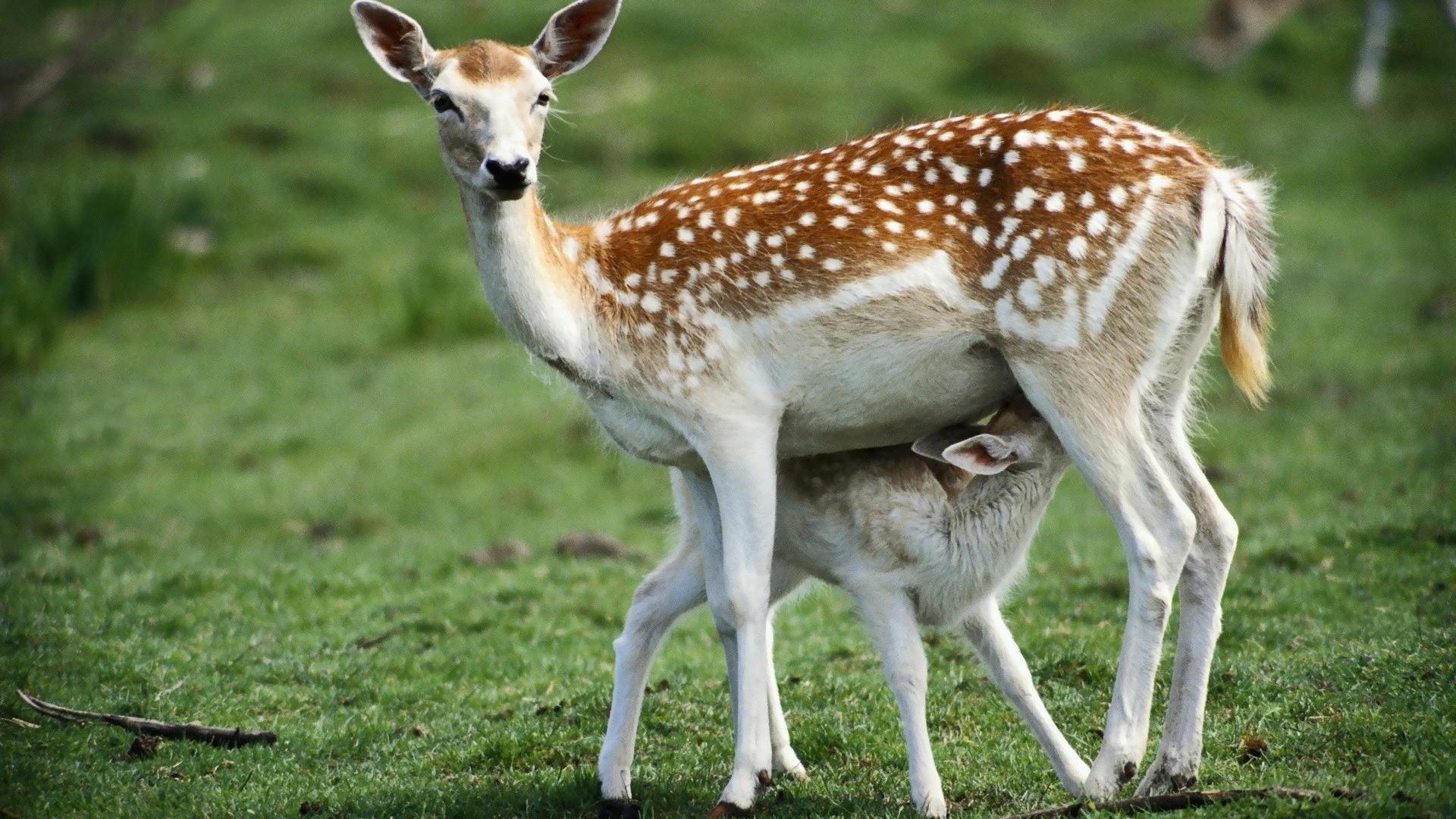 اجمل صور الحيوانات 2021 14