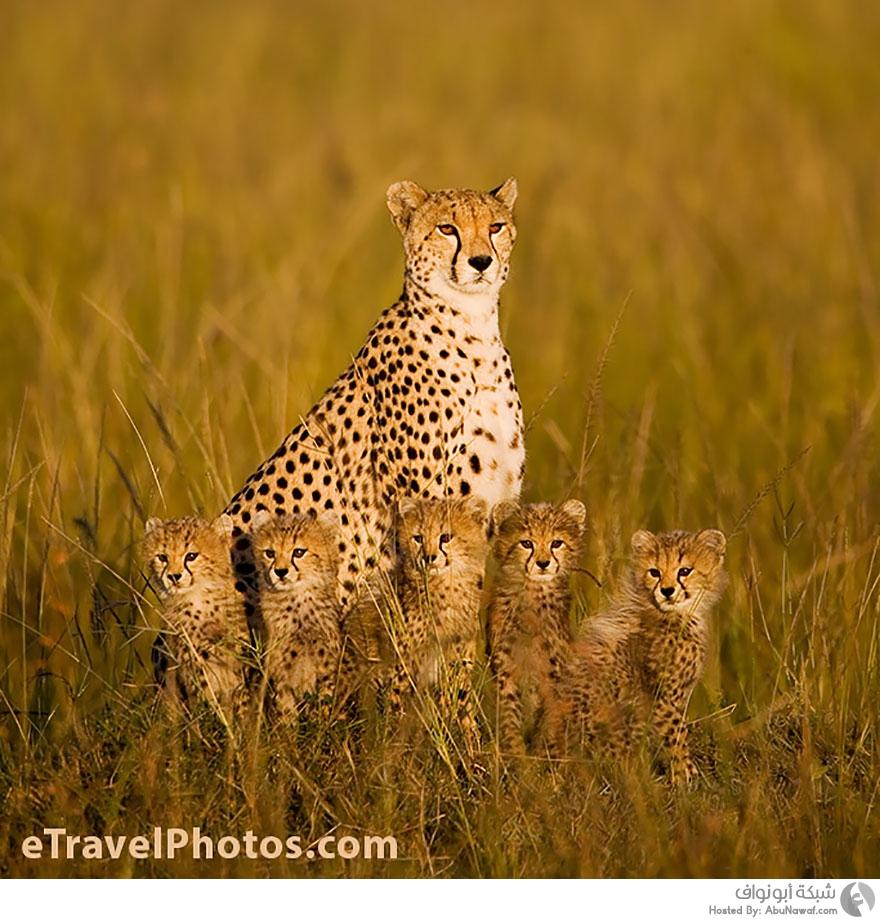 اجمل صور الحيوانات 2021 2