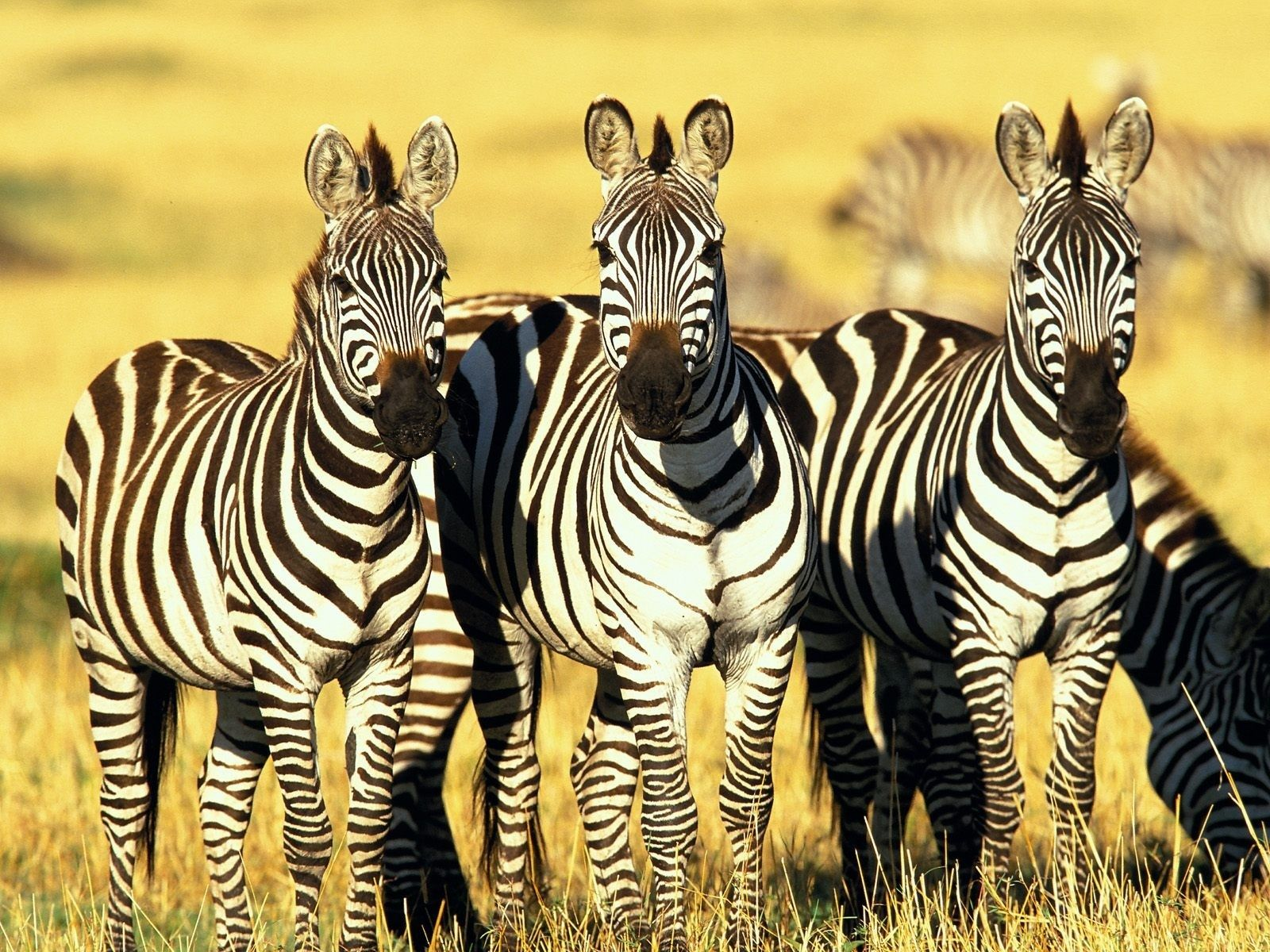 اجمل صور الحيوانات 2021 3