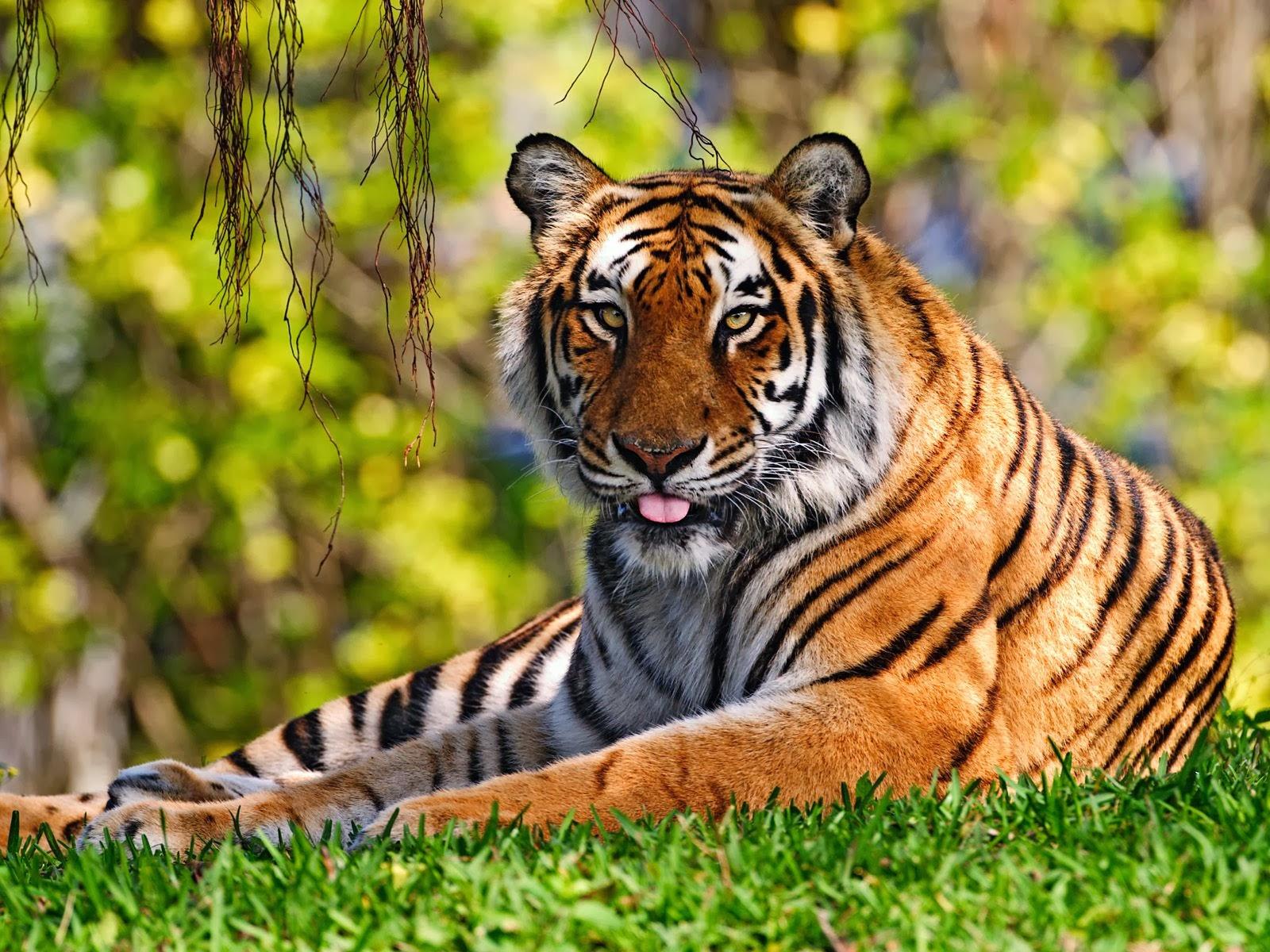 اجمل صور الحيوانات 2021 4