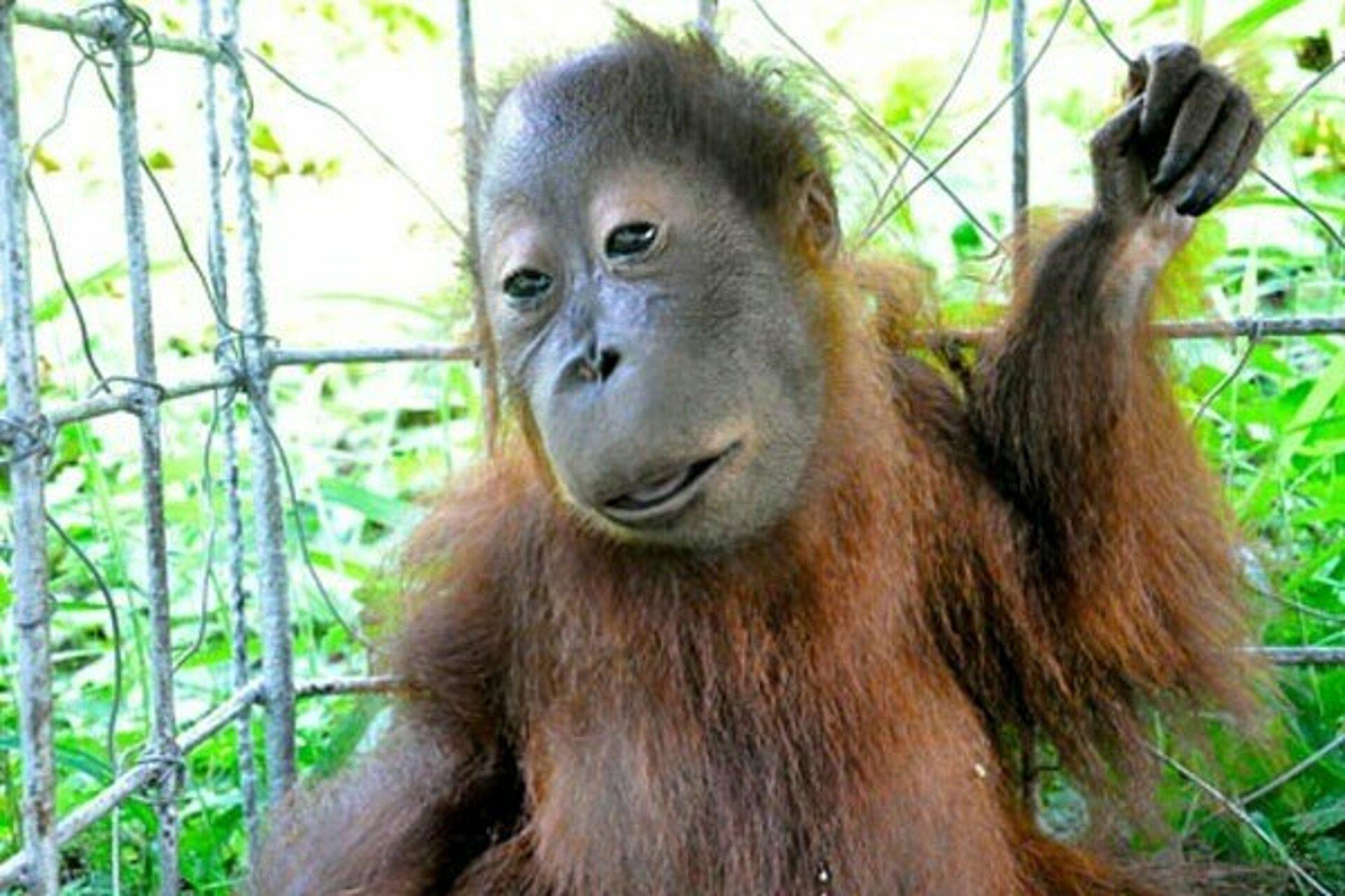اجمل صور الحيوانات 2021 9