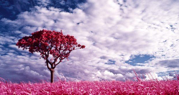 اجمل صور الطبيعة الخلابة 17