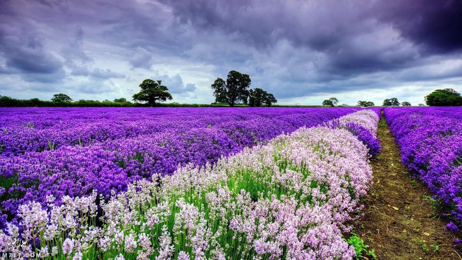اجمل صور الطبيعة الخلابة 24