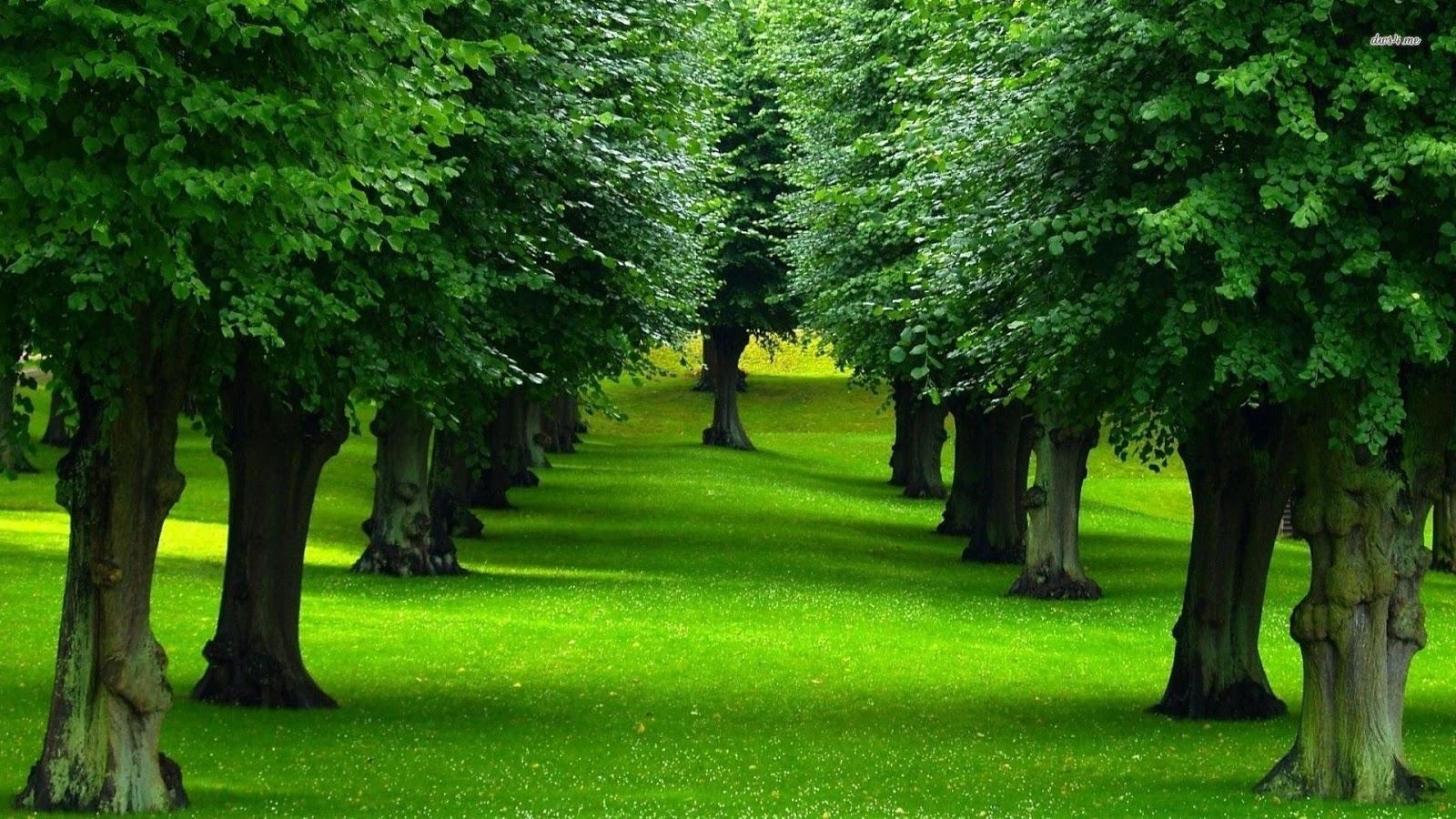 اجمل صور الطبيعة الخلابة 36