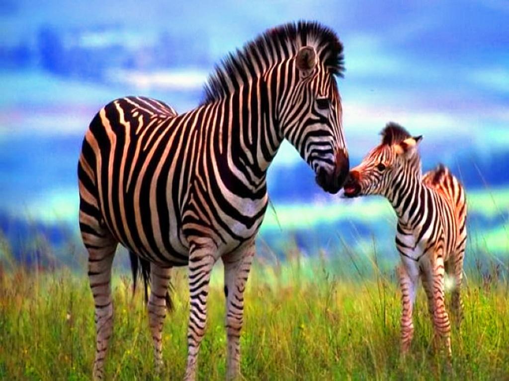 صور حيوانات كيوت 11