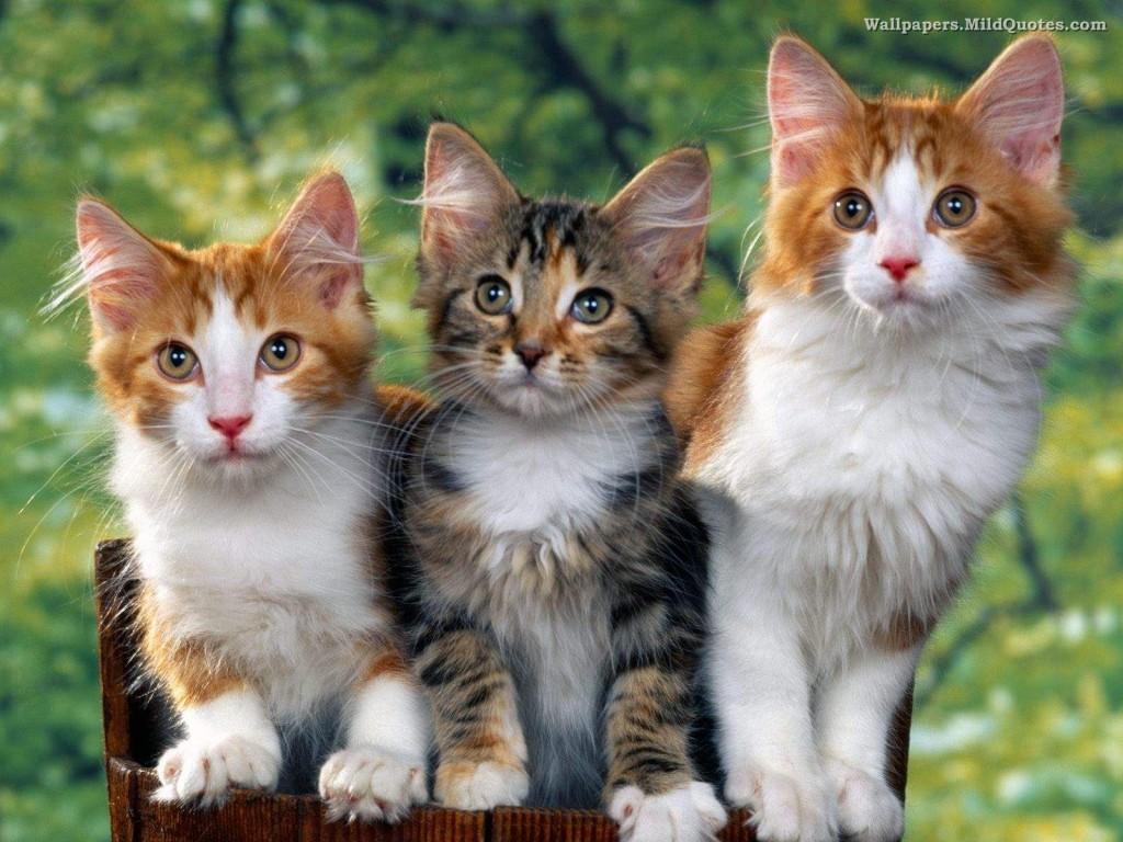 صور حيوانات كيوت 18