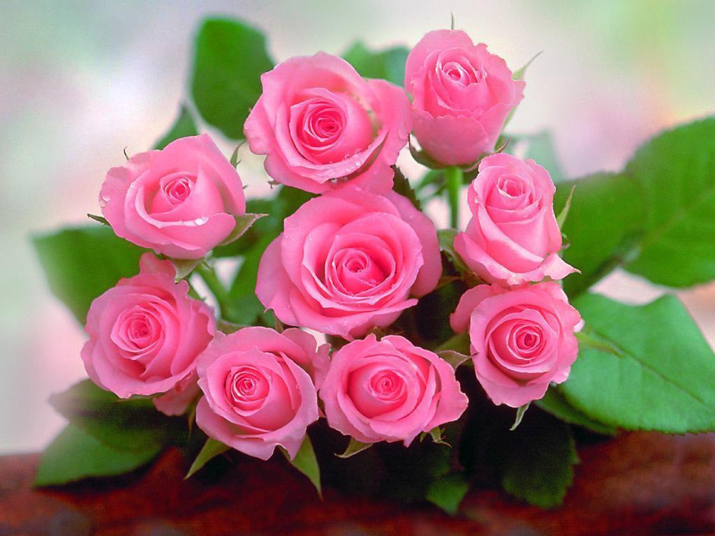 صور وردة حلوة 2