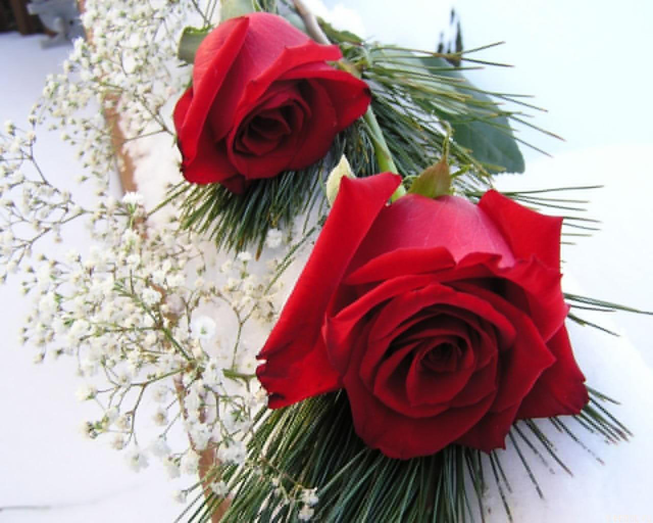 صور الورود الحلوة 3