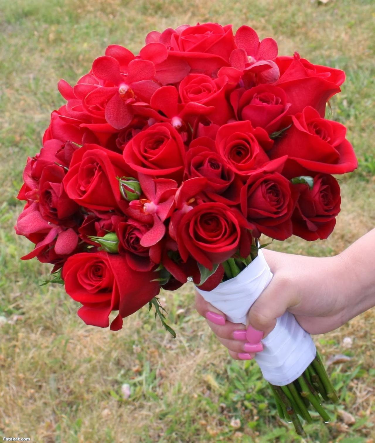 صور الوردة الحلوة 6