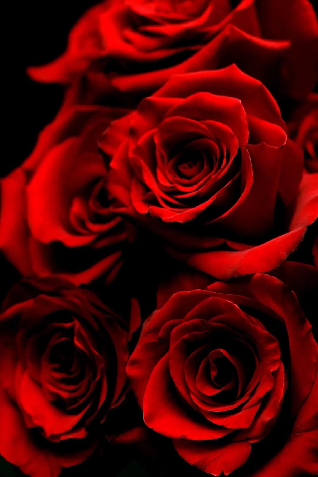 الزهور لصور الملف الشخصي 1 2