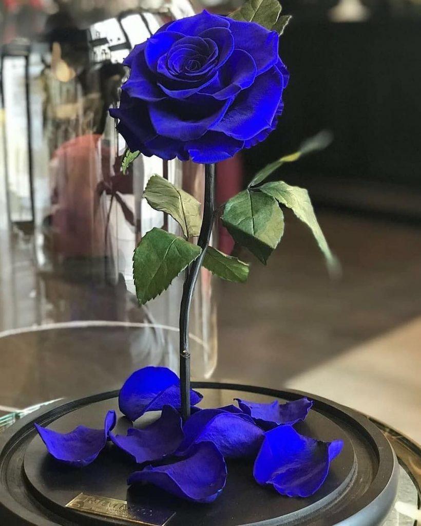 الورود لصور الملف الشخصي 2