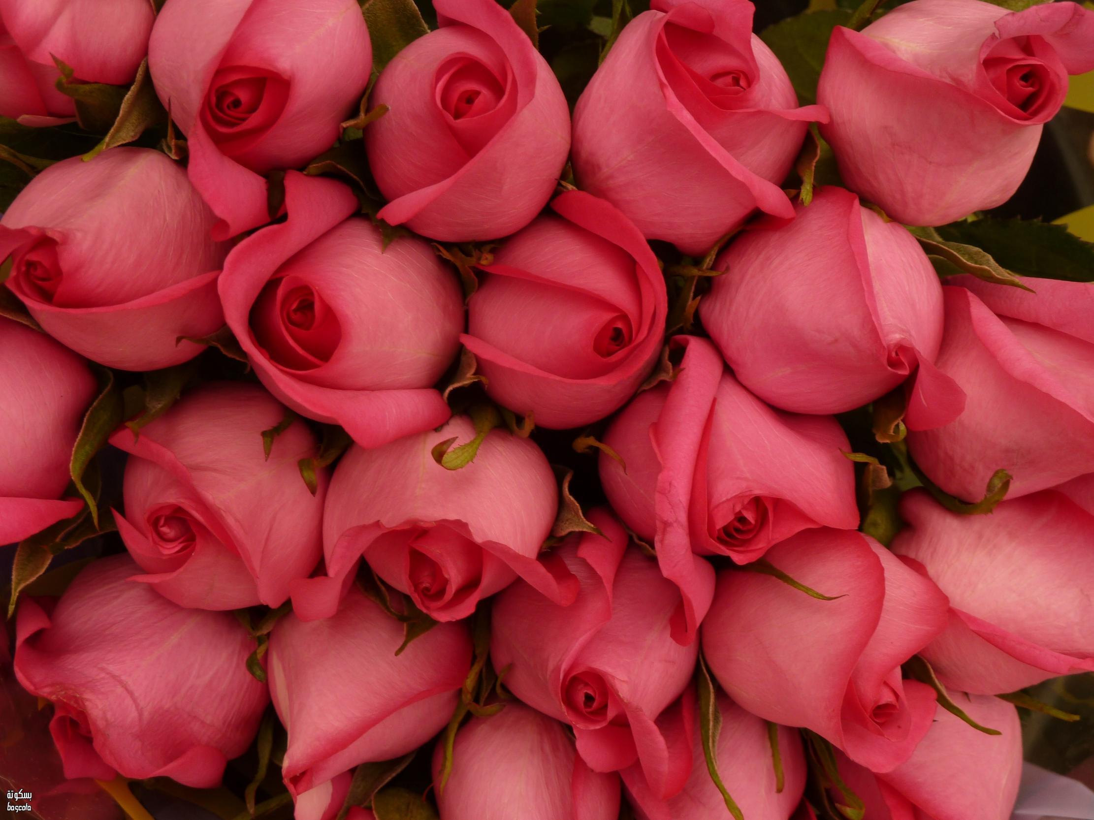 الزهور للملف الشخصي 4