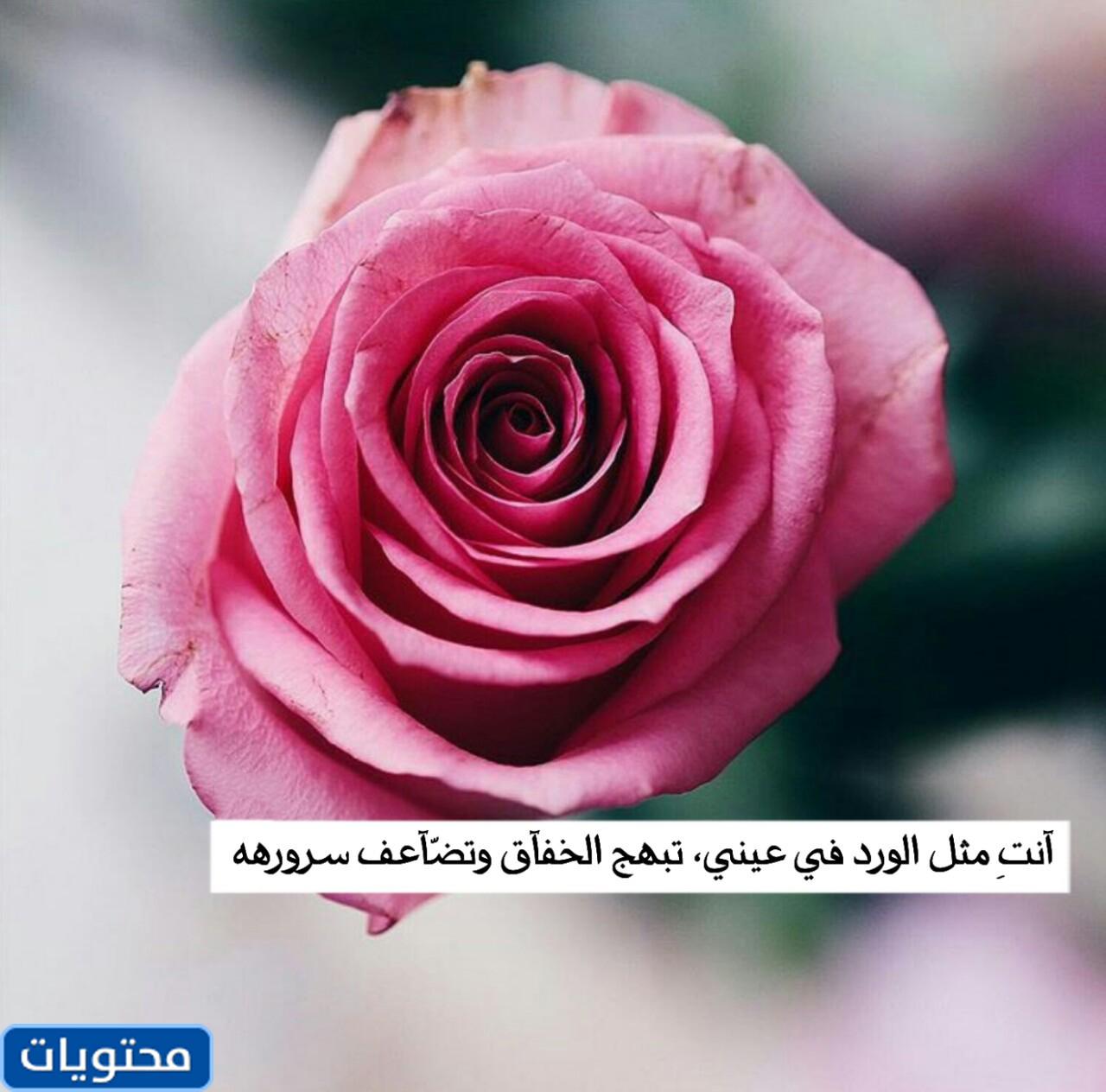 الورود لصور الملف الشخصي 8