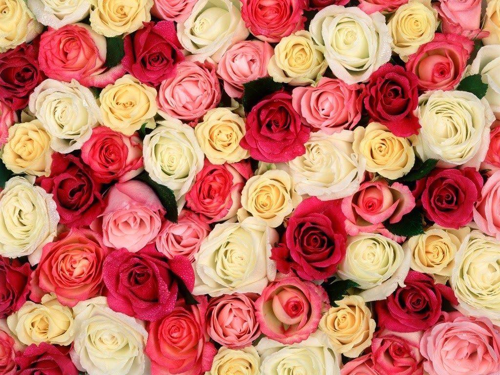 صور الورود للتصميم 2 1