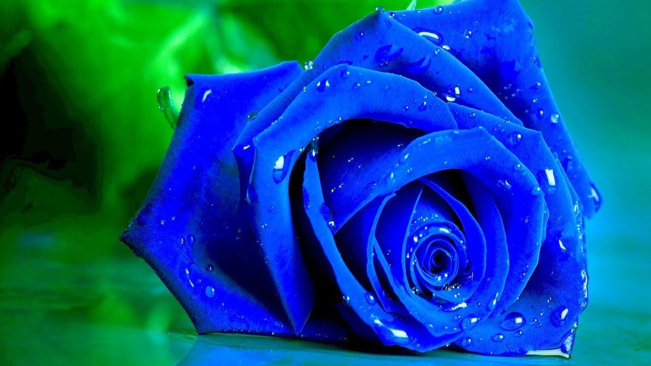 صور الورود للتصميم 8 1