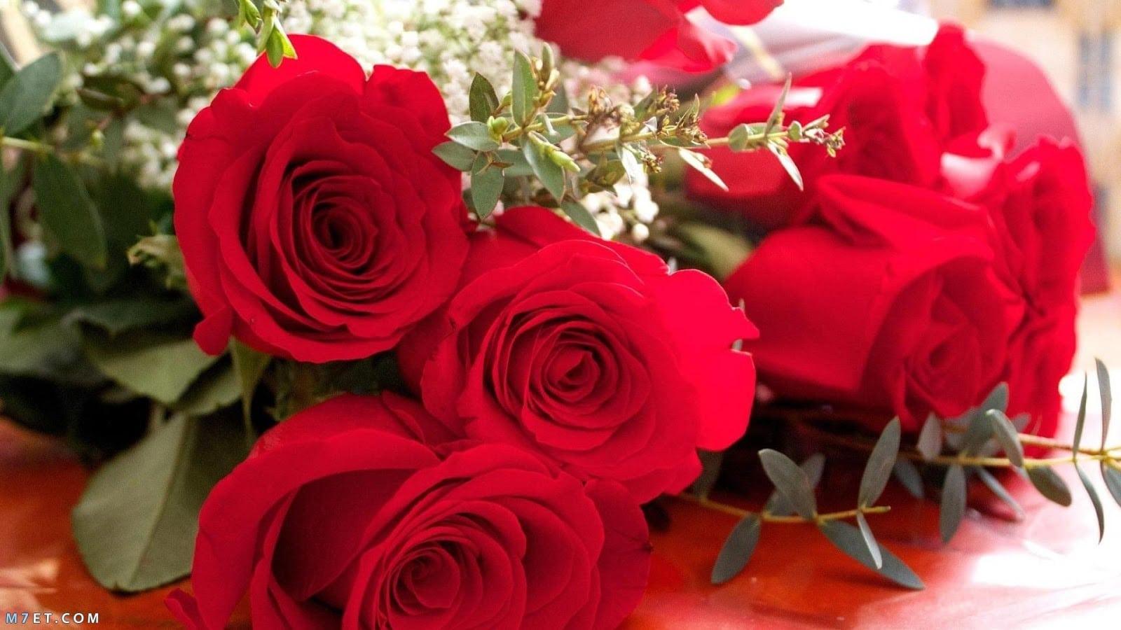 صور الورود للتصميم 9 1